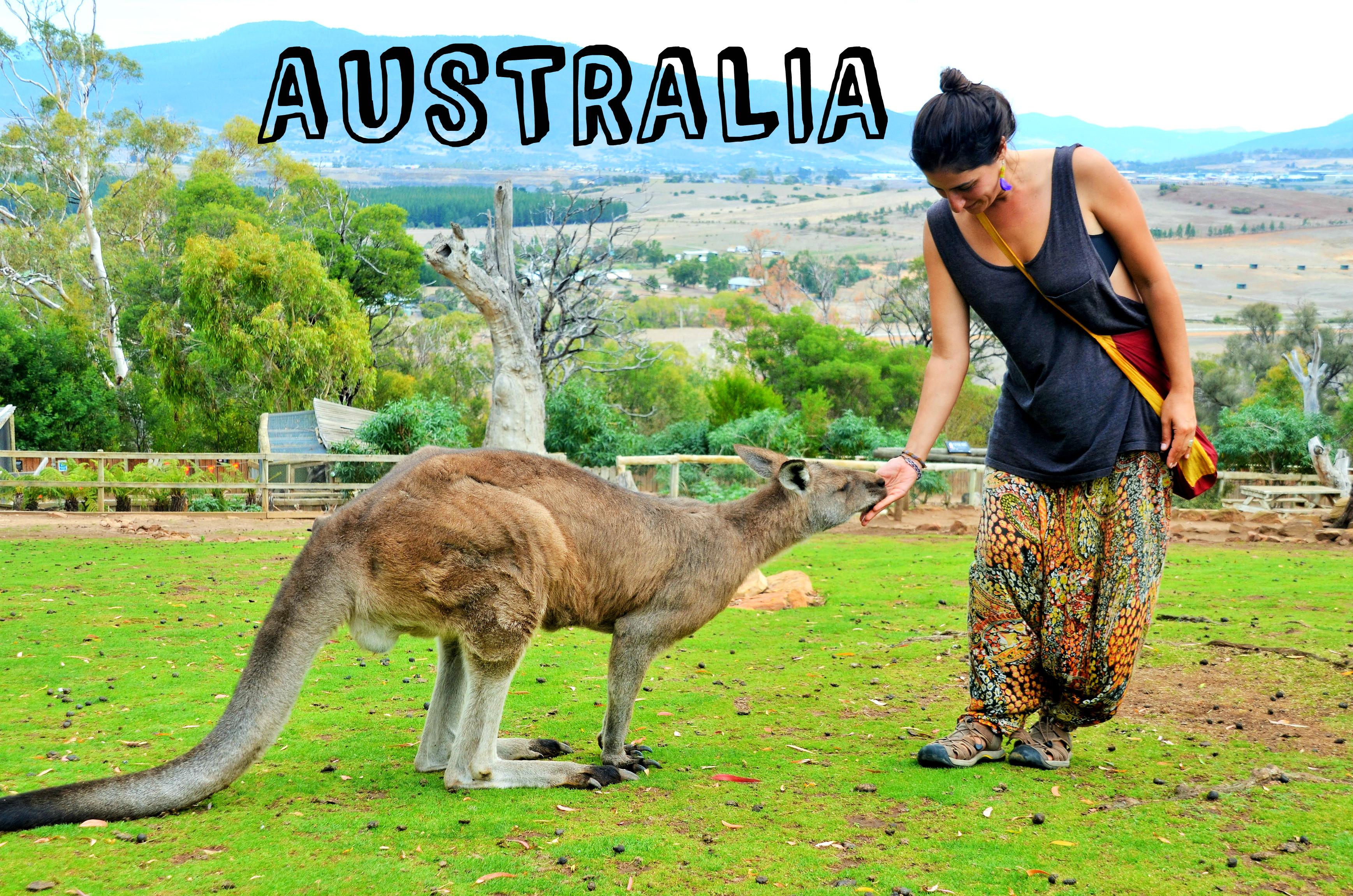 Kanguros Australia Tasmania