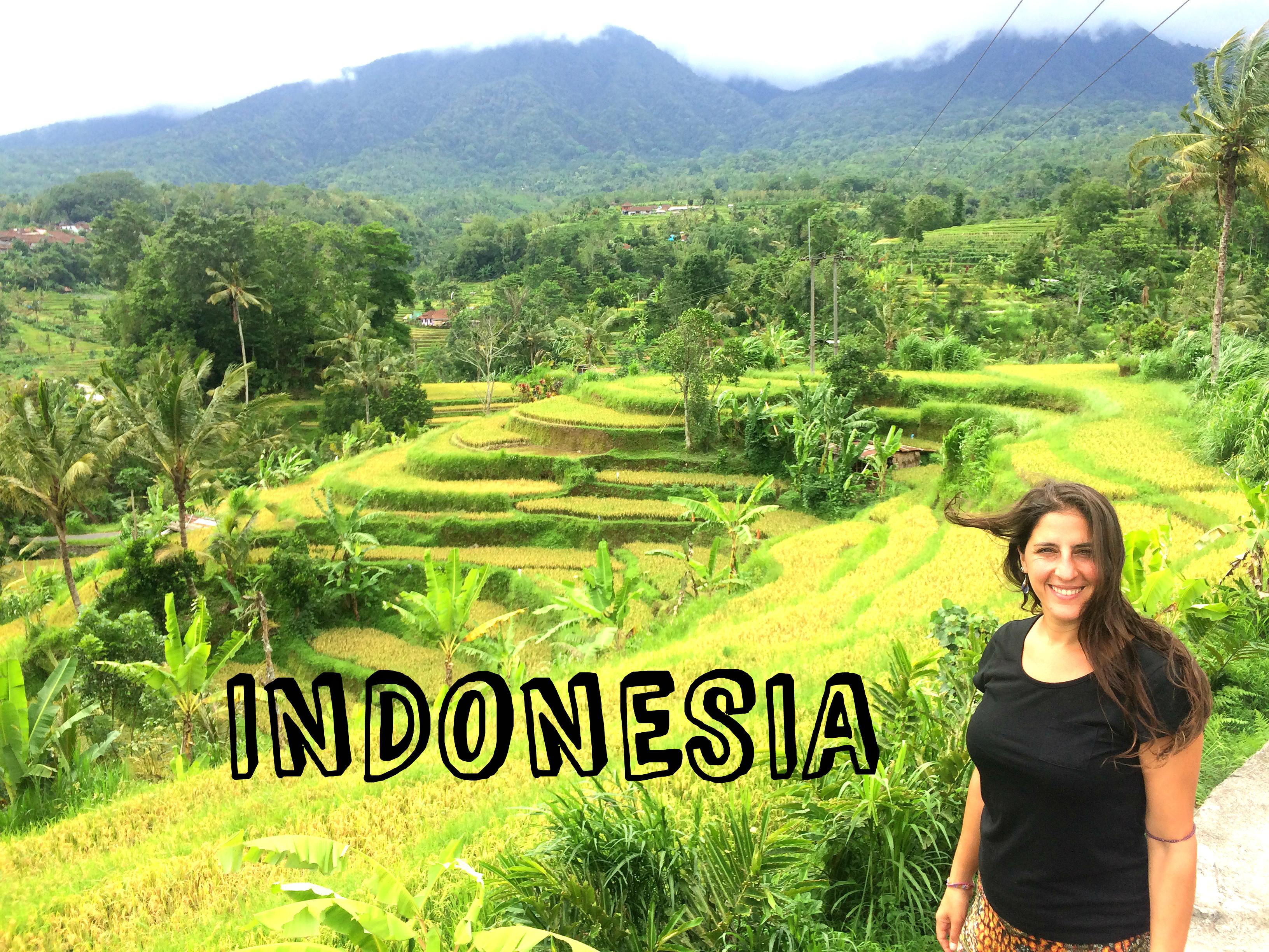 Bali campos de arroz